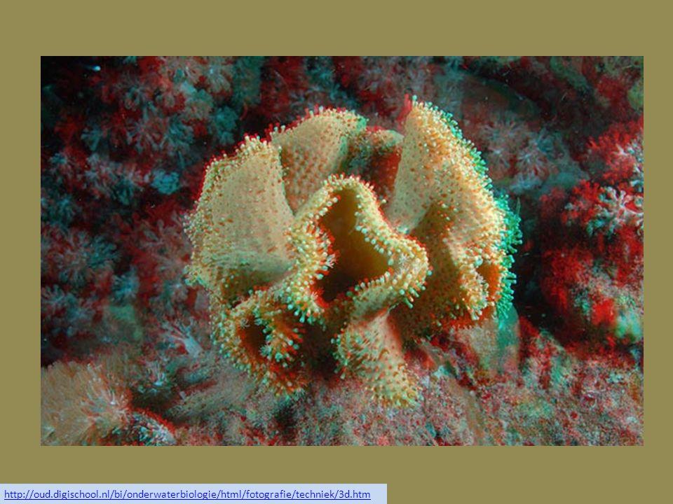http://oud.digischool.nl/bi/onderwaterbiologie/html/fotografie/techniek/3d.htm
