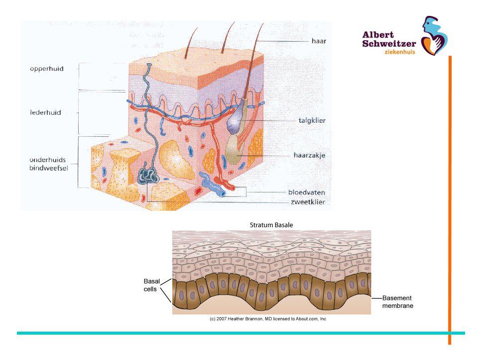 Functies van de huid Bedekking en bescherming van het lichaam Lichaamstemperatuur handhaven Zintuig Vitamine D aanmaak Psychosociaal