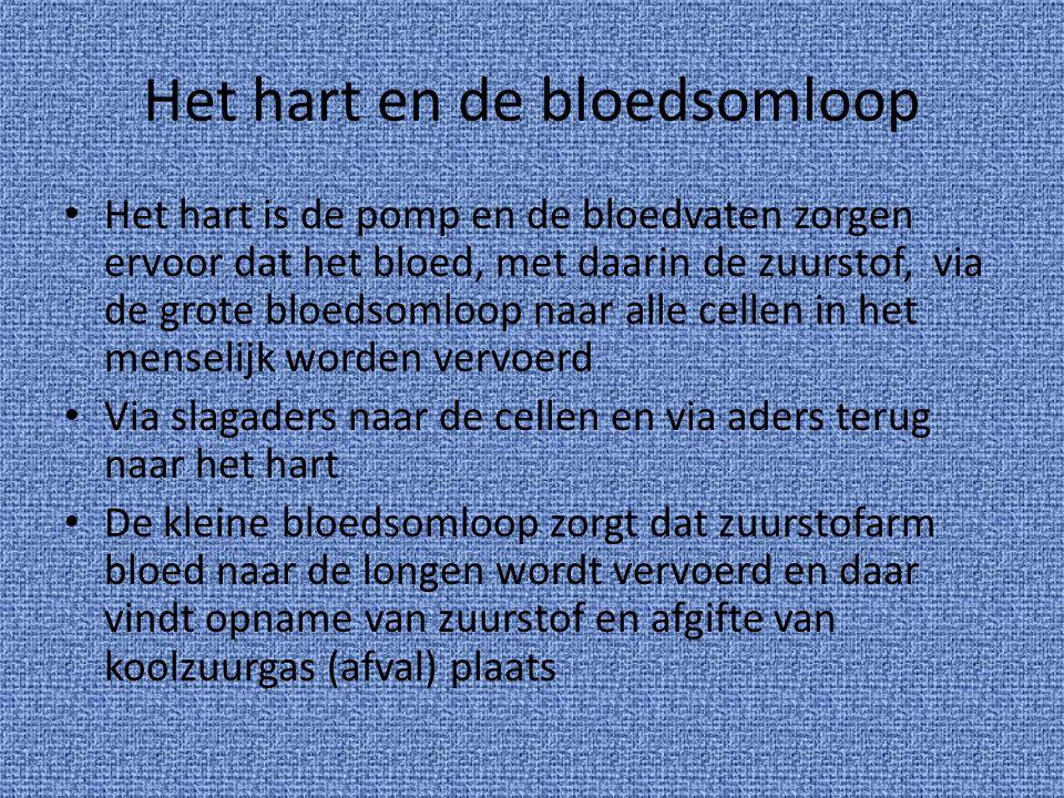 Het hart en de bloedsomloop Het hart is de pomp en de bloedvaten zorgen ervoor dat het bloed, met daarin de zuurstof, via de grote bloedsomloop naar a