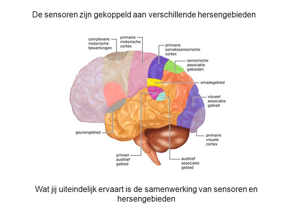De sensoren zijn gekoppeld aan verschillende hersengebieden Wat jij uiteindelijk ervaart is de samenwerking van sensoren en hersengebieden