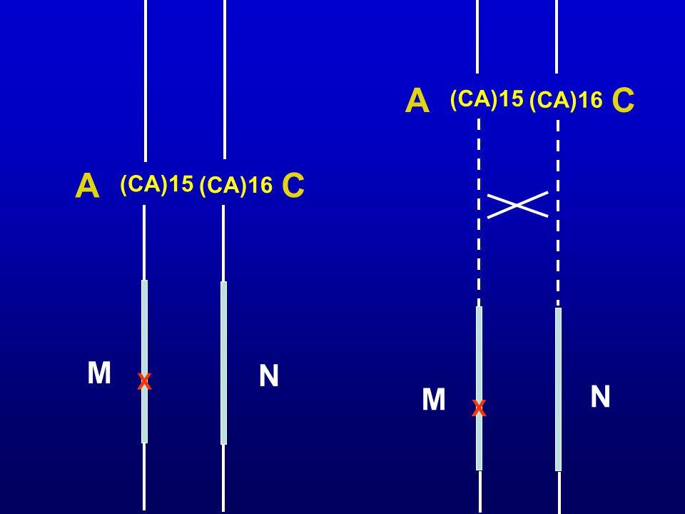 (CA)15 (CA)16 A C X M N (CA)15 (CA)16 A C X M N