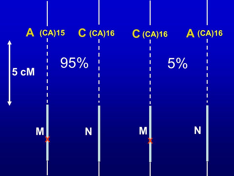 (CA)15 (CA)16 A C X M N X M C N A 95% 5% 5 cM