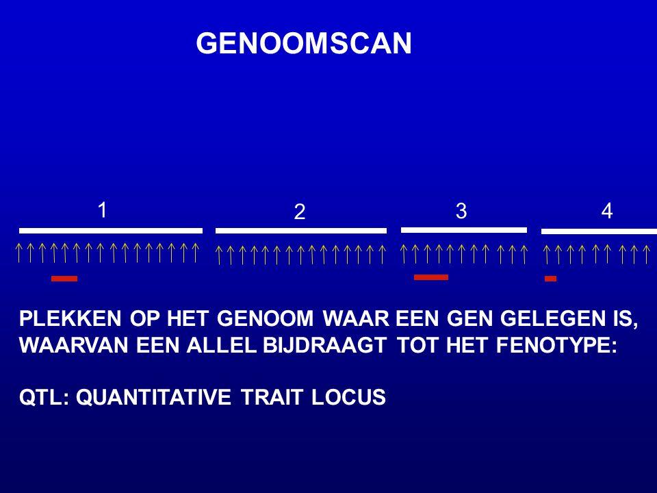 1 2 3 4 GENOOMSCAN PLEKKEN OP HET GENOOM WAAR EEN GEN GELEGEN IS, WAARVAN EEN ALLEL BIJDRAAGT TOT HET FENOTYPE: QTL: QUANTITATIVE TRAIT LOCUS