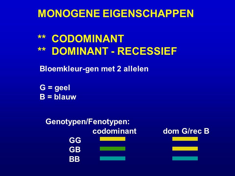 MONOGENE EIGENSCHAPPEN ** CODOMINANT ** DOMINANT - RECESSIEF Bloemkleur-gen met 2 allelen G = geel B = blauw Genotypen/Fenotypen: codominantdom G/rec