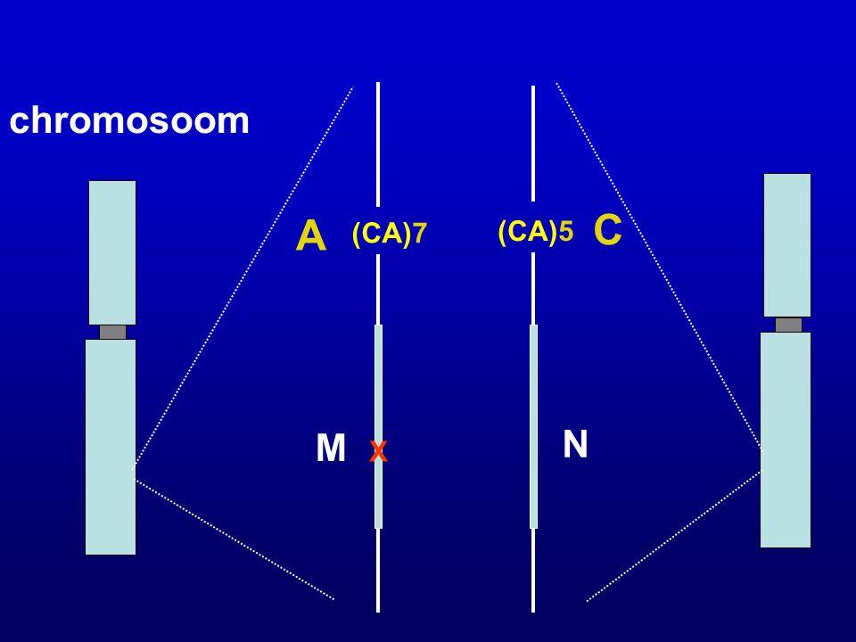chromosoom (CA)7 (CA)5 A C X M N