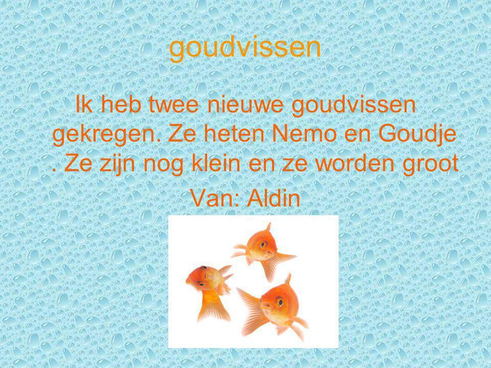 goudvissen Ik heb twee nieuwe goudvissen gekregen. Ze heten Nemo en Goudje. Ze zijn nog klein en ze worden groot Van: Aldin