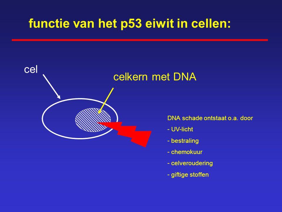 In een cel zijn wel honderdduizend eiwitten actief Afhankelijk van het weefseltype zijn per cel verschillende eiwitten actief o.a. enzymen ademhaling