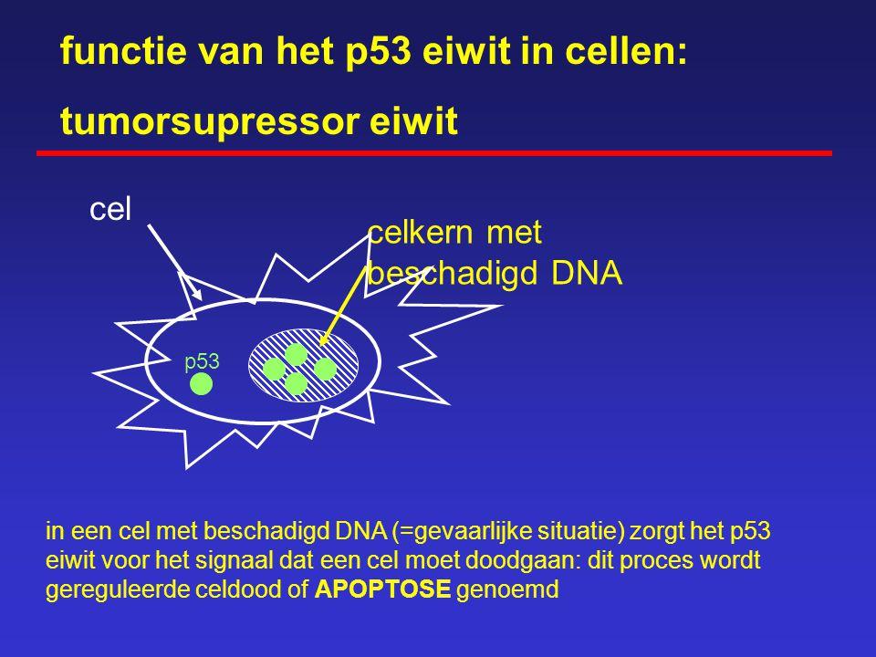 functie van het p53 eiwit in cellen: cel celkern met DNA DNA schade ontstaat o.a. door - UV-licht - bestraling - chemokuur - celveroudering - giftige