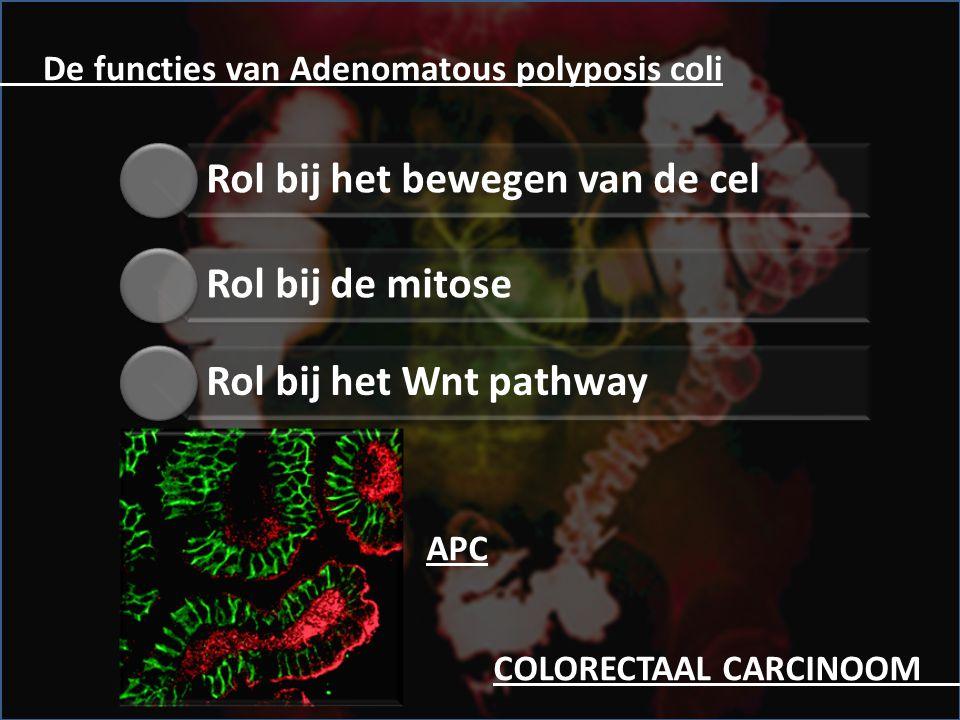 APC. De functies van Adenomatous polyposis coli Rol bij het bewegen van de cel Rol bij het Wnt pathway Rol bij de mitose COLORECTAAL CARCINOOM.