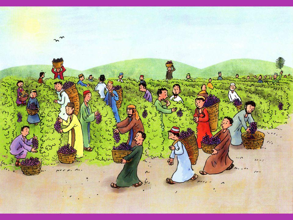 Kleine ezel Kleine ezel uit de stal Strek je beentjes vlug t Is de Heer die komen zal Hij klimt op je rug Hij is Heer - Hosanna (6x) Hosanna voor de Heer – ia Kleine ezel uit de stal Stap maar stevig door Hoor de kinderen zingen al In een vrolijk koor Hij is Heer - Hosanna (6x) Hosanna voor de Heer – ia Kleine ezel uit de stal Wat een blijde dag t Is de koning van t heelal Die je dragen mag Hij is Heer - Hosanna (6x) Hosanna voor de Heer - ia