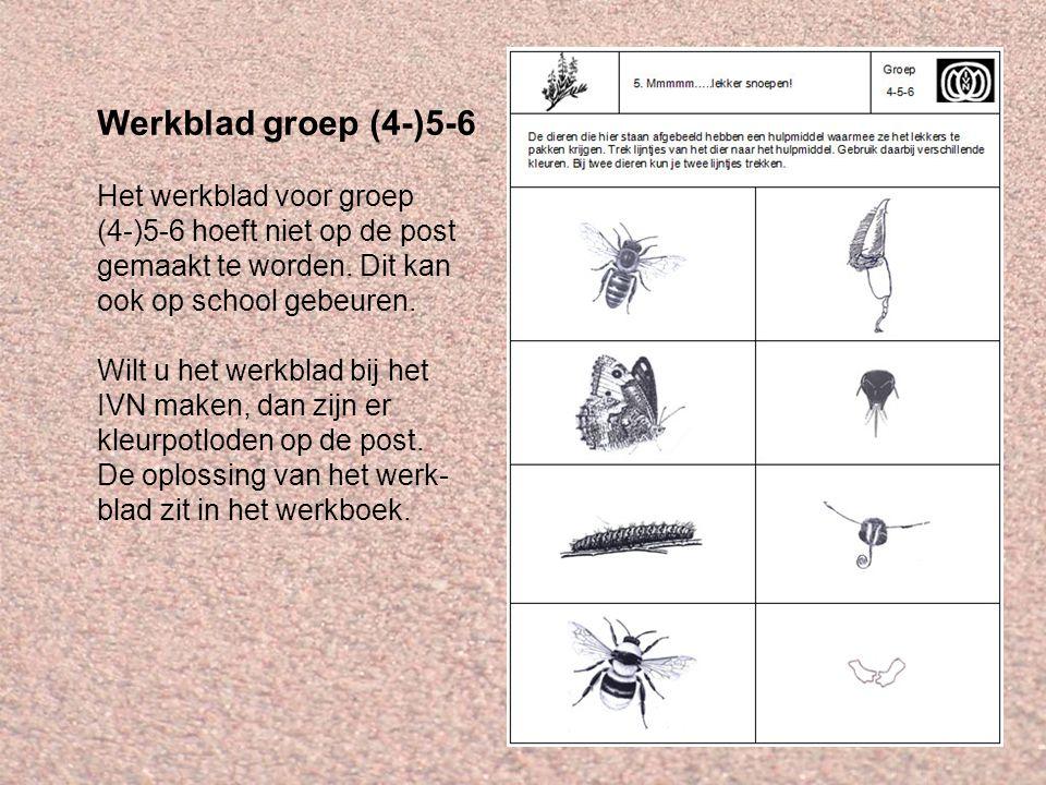 Werkblad groep (4-)5-6 Het werkblad voor groep (4-)5-6 hoeft niet op de post gemaakt te worden. Dit kan ook op school gebeuren. Wilt u het werkblad bi