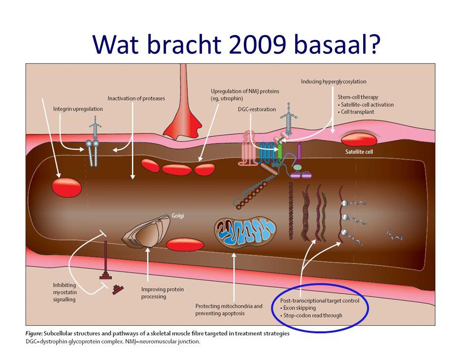 Wheeler TM et al Science 2009 Warf MB et al PNAS 2009 Mulders SA et al PNAS 2009 Molecular therapy in DM1