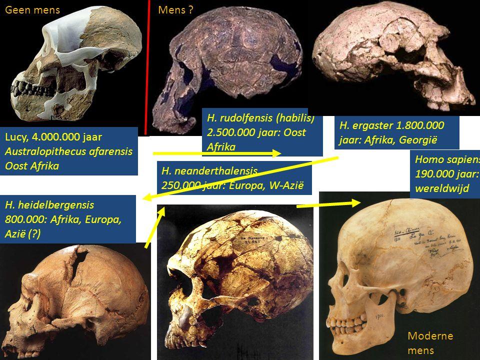 Lucy, 4.000.000 jaar Australopithecus afarensis Oost Afrika H. rudolfensis (habilis) 2.500.000 jaar: Oost Afrika H. neanderthalensis 250.000 jaar: Eur