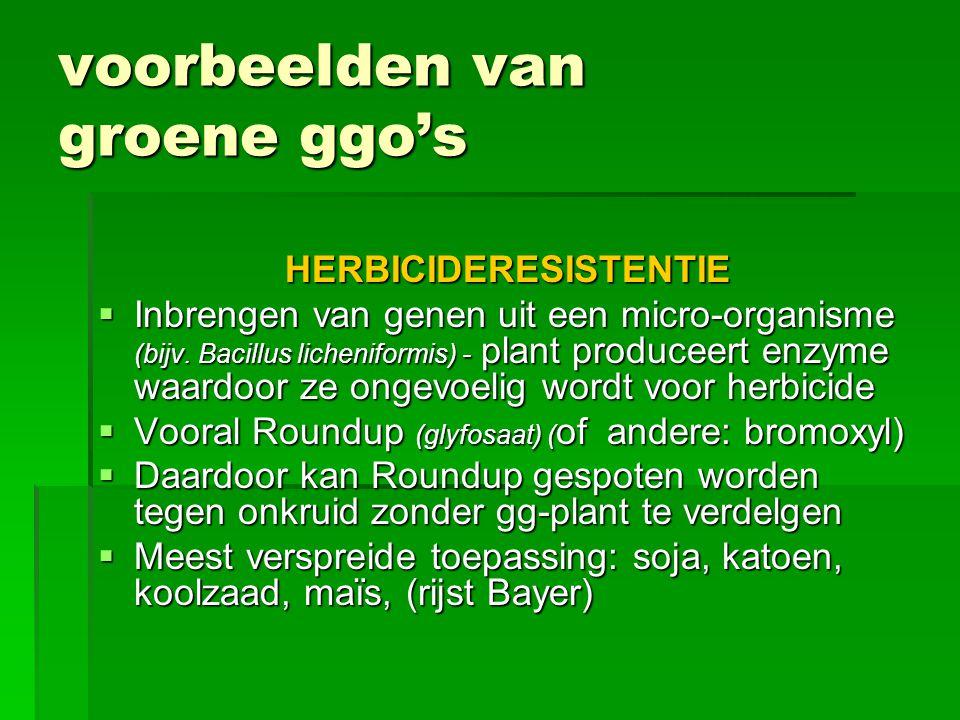 voorbeelden van groene ggo's INSECTENRESISTENTIE  Inbrengen van Bt-genen uit micro-organismen (Bacillus thuringiensis) waardoor de plant een eiwit produceert dat insectenlarven doodt  Insecticide wordt ingebouwd  Vooral bij maïs, katoen  Bacteriepreparaten worden al lang gebruikt als biologisch bestrijdingsmiddel