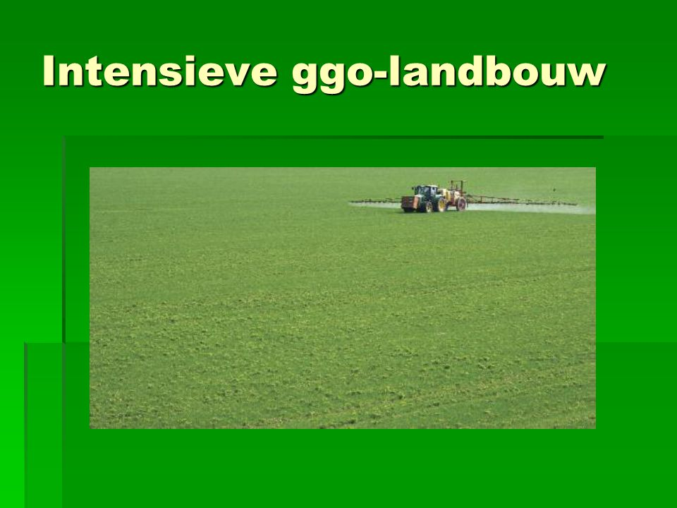 Intensieve ggo-landbouw