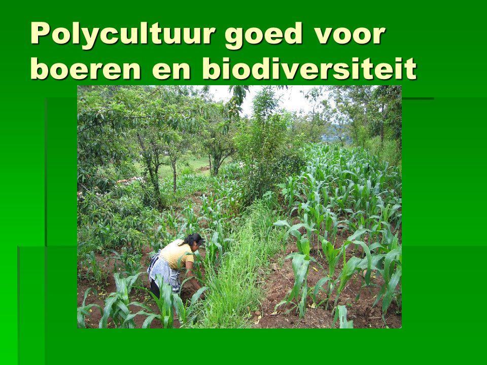 Polycultuur goed voor boeren en biodiversiteit