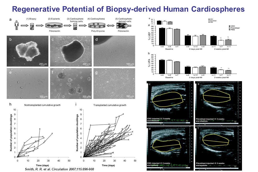 Smith, R. R. et al. Circulation 2007;115:896-908 Regenerative Potential of Biopsy-derived Human Cardiospheres