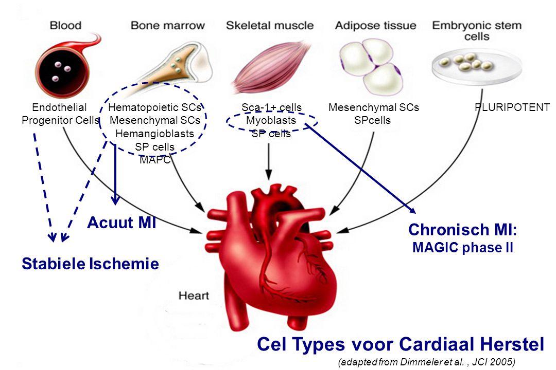 Sca-1+ cells c-Kit + cells SP cells Endothelial Progenitor Cells Hematopoietic SCs Mesenchymal SCs Hemangioblasts SP cells MAPC Sca-1+ cells Myoblasts SP cells Mesenchymal SCs SPcells PLURIPOTENT Cel Types voor Cardiaal Herstel (adapted from Dimmeler et al., JCI 2005) Chronisch MI: MAGIC phase II Acuut MI Stabiele Ischemie