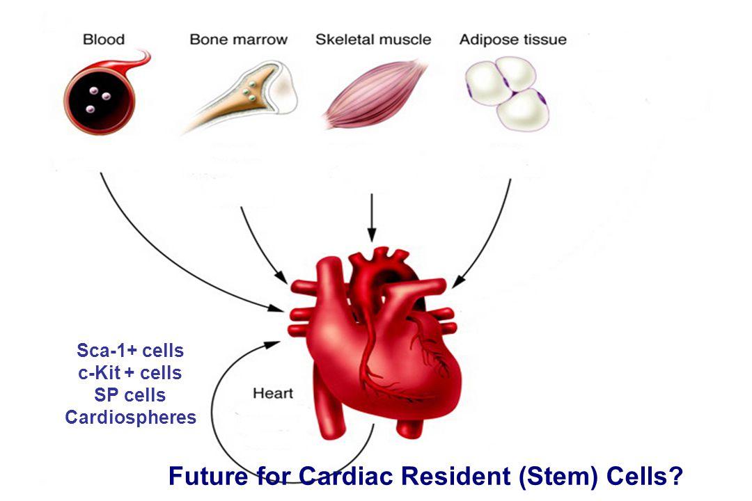 Sca-1+ cells c-Kit + cells SP cells Cardiospheres Future for Cardiac Resident (Stem) Cells?