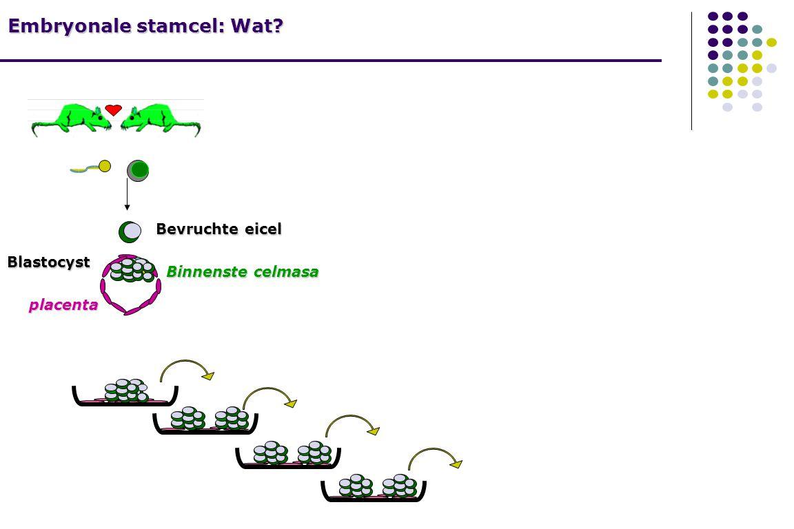 Embryonale stamcel: Wat? Bevruchte eicel Blastocyst placenta Binnenste celmasa