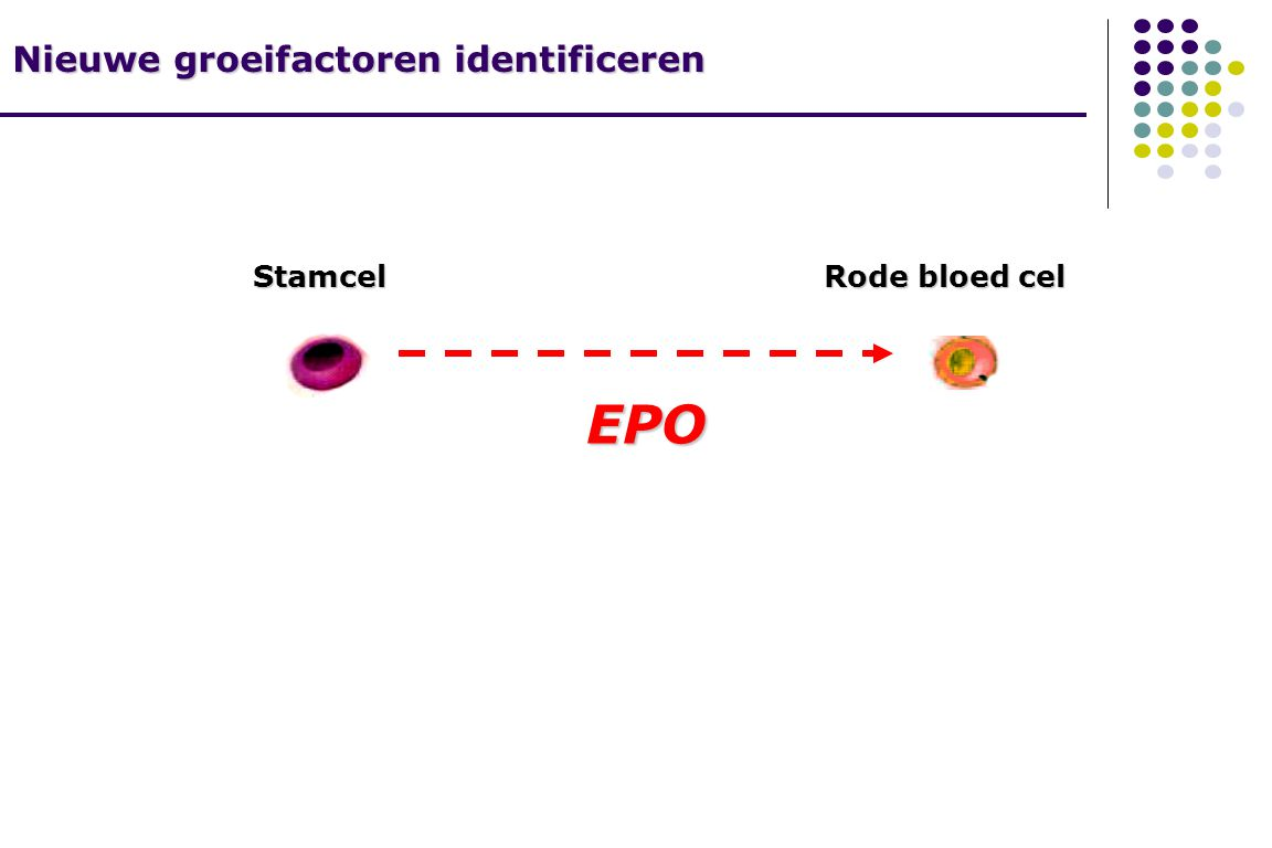 Stamcel Rode bloed cel EPO Nieuwe groeifactoren identificeren