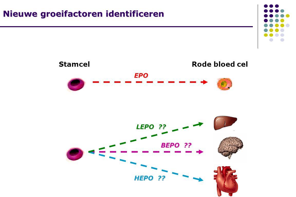 StamcelRode bloed cel EPO LEPO BEPO HEPO Nieuwe groeifactoren identificeren