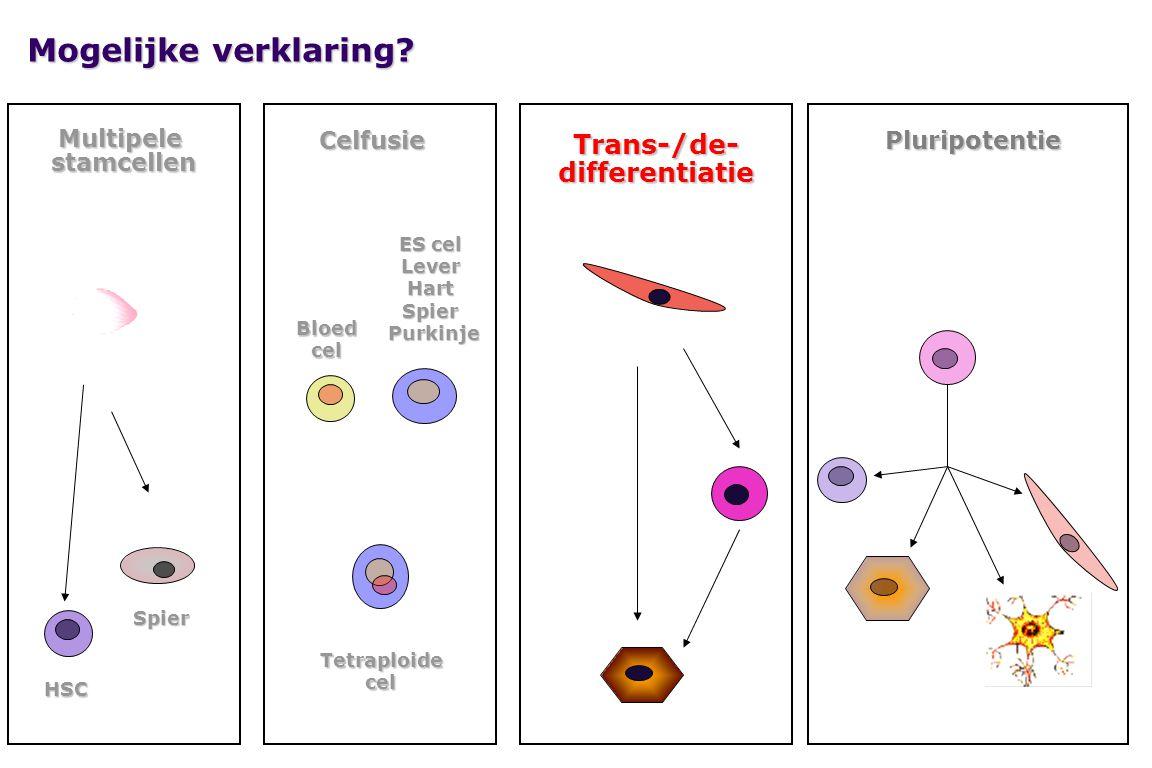 Mogelijke verklaring? Multipelestamcellen Spier Spier HSC Celfusie ES cel LeverHartSpier Purkinje Purkinje Bloedcel Tetraploidecel Trans-/de-different