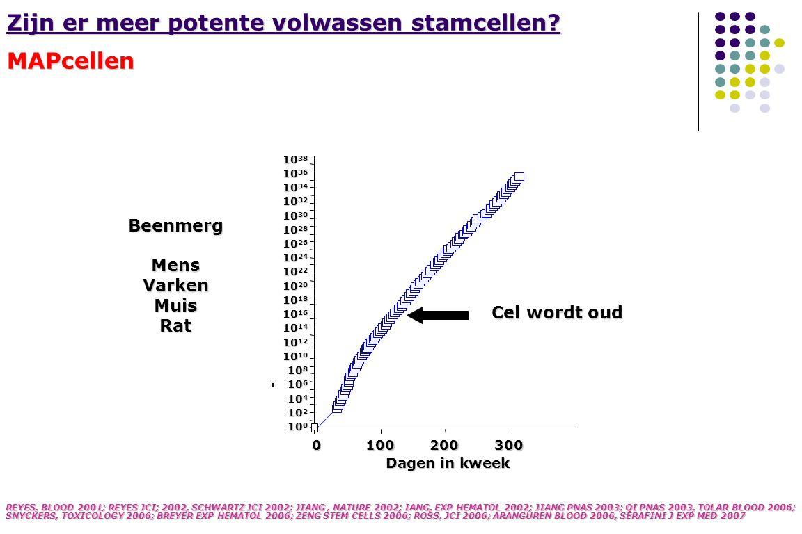 Endothelium Hepatocyte Astrocyte oligo/neuron CD45- Sca1-, Thy1- Oct4 Telomerase+ REYES, BLOOD 2001, REYES JCI, 2002, SCHWARTZ JCI 2003, JIANG ET AL, NATURE 2002; JIANG PNAS 2003, QI PNAS 2003 Mens Musi Rat 5% O 2, 6% CO 2 2% FCS EGF, PDGF, LIF Isolatie van pluripotente stamcellen van beenmerg