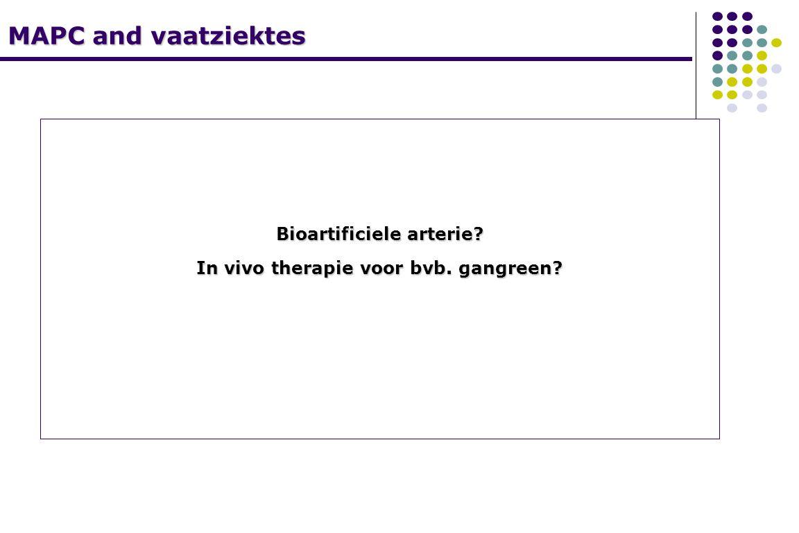 MAPC and vaatziektes Bioartificiele arterie? In vivo therapie voor bvb. gangreen?