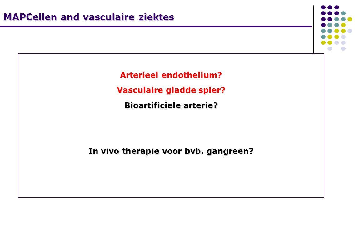MAPCellen and vasculaire ziektes Arterieel endothelium.