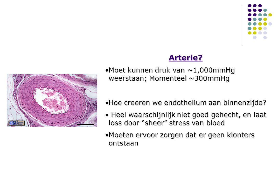 MAPCellen and vasculaire ziektes Arterieel endothelium: JA Vasculaire gladde spier: JA Bioartificiele arterie.