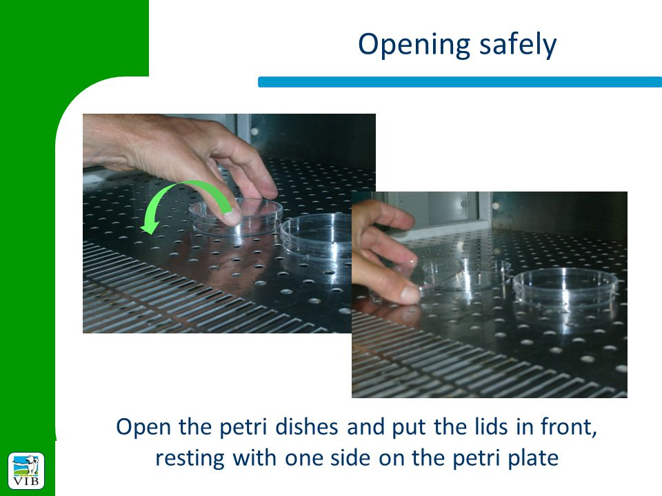 Opening safely Open the petri dishes and put the lids in front, resting with one side on the petri plate