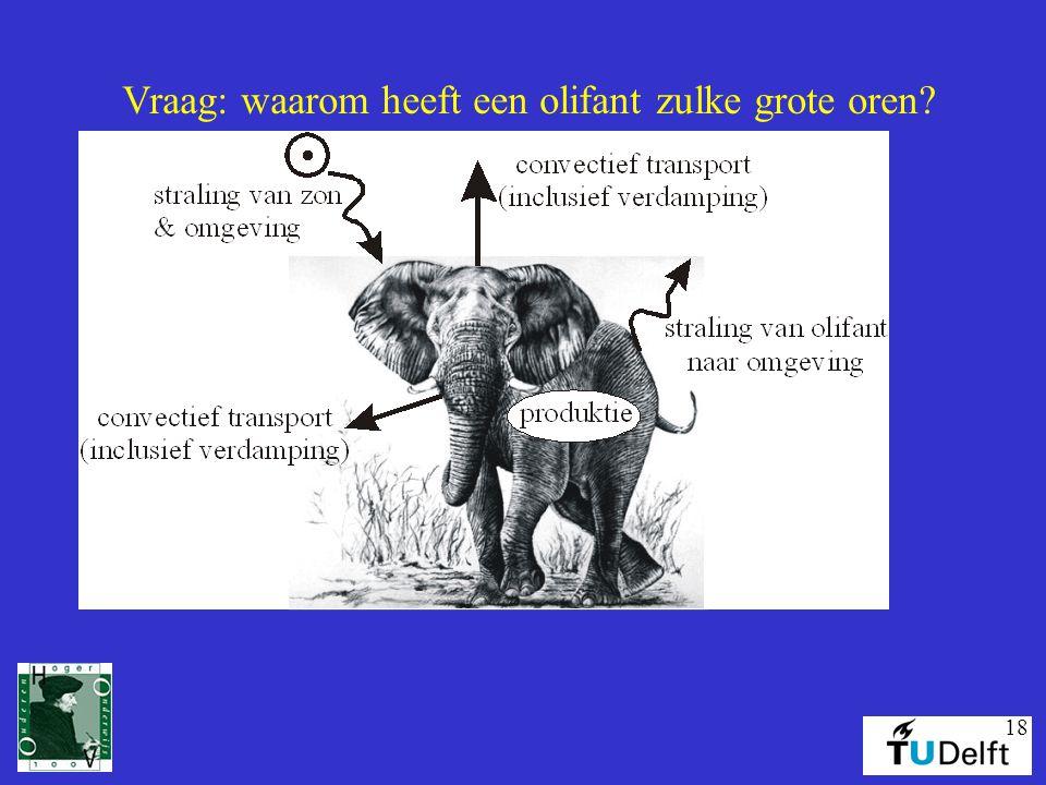 18 Vraag: waarom heeft een olifant zulke grote oren?
