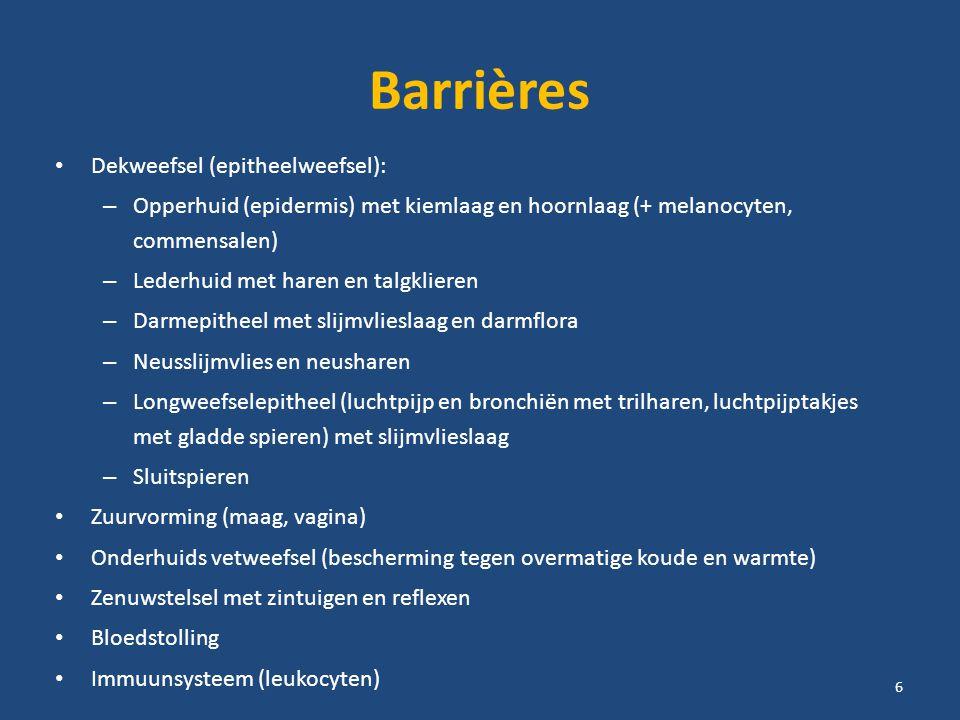 Barrières Dekweefsel (epitheelweefsel): – Opperhuid (epidermis) met kiemlaag en hoornlaag (+ melanocyten, commensalen) – Lederhuid met haren en talgklieren – Darmepitheel met slijmvlieslaag en darmflora – Neusslijmvlies en neusharen – Longweefselepitheel (luchtpijp en bronchiën met trilharen, luchtpijptakjes met gladde spieren) met slijmvlieslaag – Sluitspieren Zuurvorming (maag, vagina) Onderhuids vetweefsel (bescherming tegen overmatige koude en warmte) Zenuwstelsel met zintuigen en reflexen Bloedstolling Immuunsysteem (leukocyten) 6