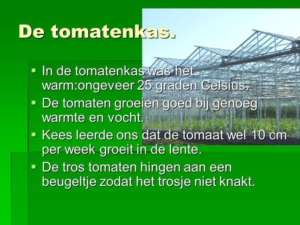 De tomatenkas.  In de tomatenkas was het warm:ongeveer 25 graden Celsius.  De tomaten groeien goed bij genoeg warmte en vocht.  Kees leerde ons dat