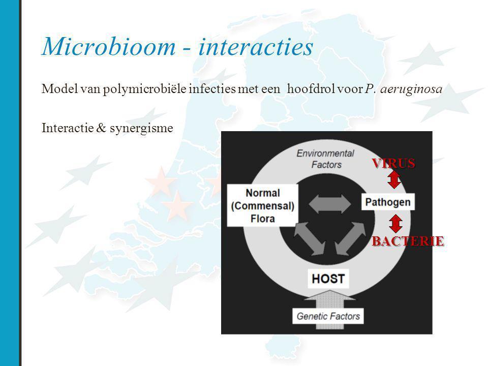 Microbioom - interacties Model van polymicrobiële infecties met een hoofdrol voor P.
