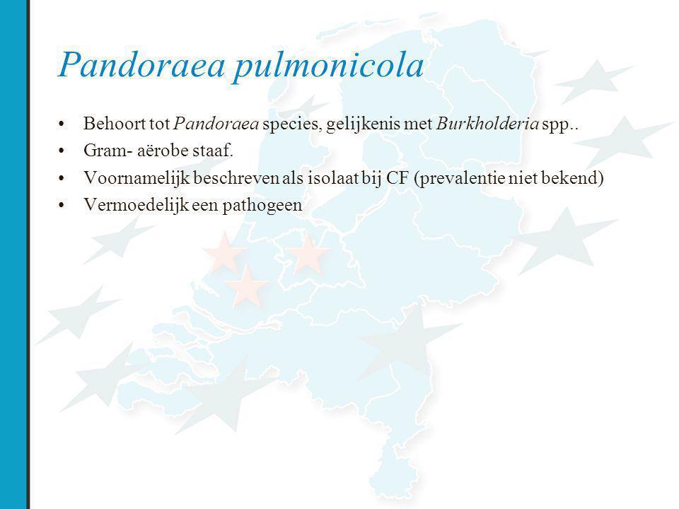 Pandoraea pulmonicola Behoort tot Pandoraea species, gelijkenis met Burkholderia spp..
