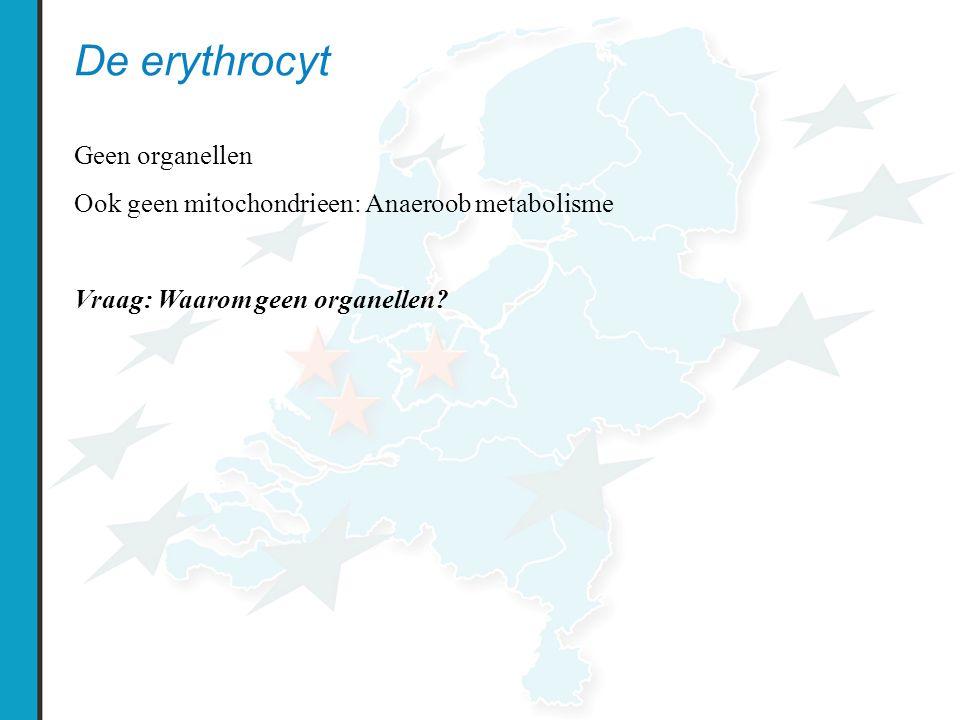 De erythrocyt Geen organellen Ook geen mitochondrieen: Anaeroob metabolisme Vraag: Waarom geen organellen?