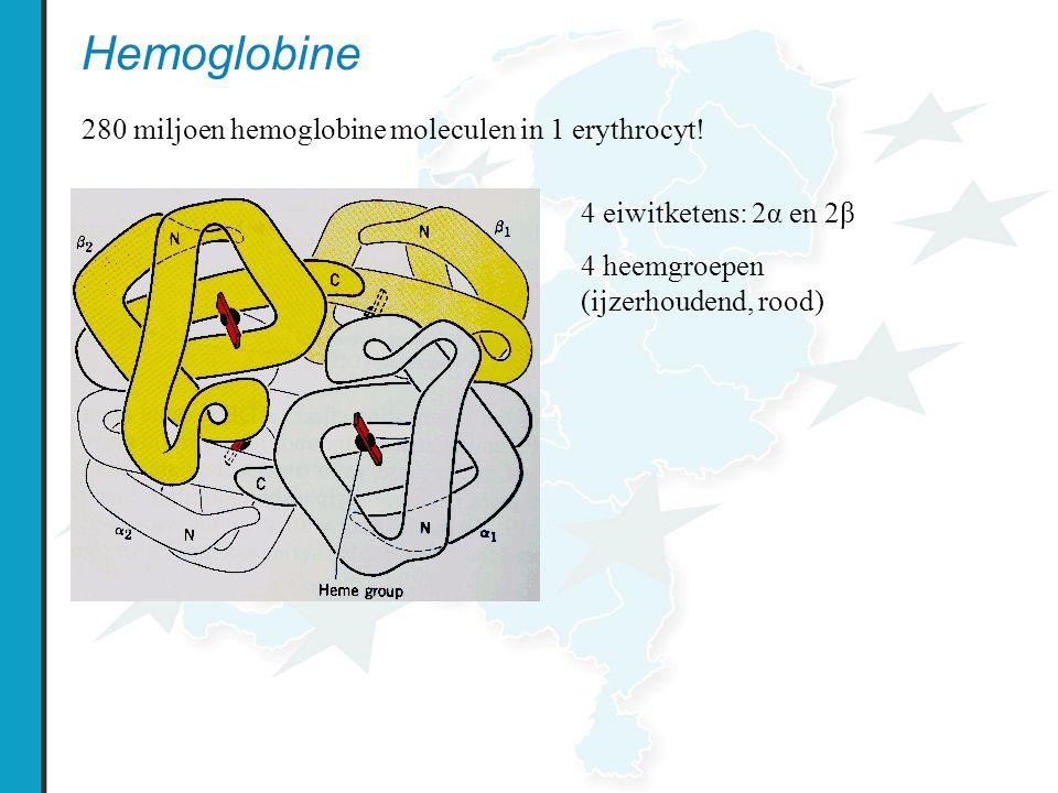 Hemoglobine 280 miljoen hemoglobine moleculen in 1 erythrocyt! 4 eiwitketens: 2α en 2β 4 heemgroepen (ijzerhoudend, rood)
