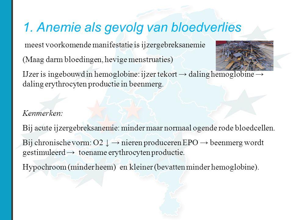 1. Anemie als gevolg van bloedverlies meest voorkomende manifestatie is ijzergebreksanemie (Maag darm bloedingen, hevige menstruaties) IJzer is ingebo