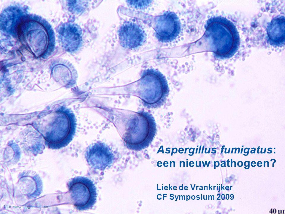 Aspergillus fumigatus: een nieuw pathogeen? Lieke de Vrankrijker CF Symposium 2009 foto: www.labgeminis.com