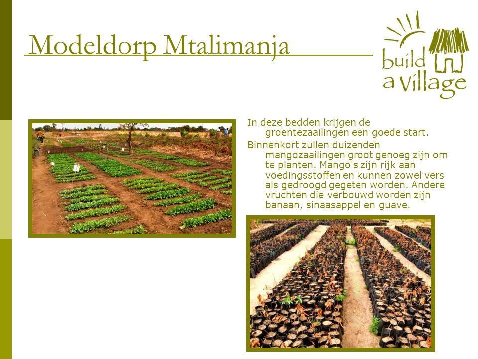 In deze bedden krijgen de groentezaailingen een goede start. Binnenkort zullen duizenden mangozaailingen groot genoeg zijn om te planten. Mango's zijn