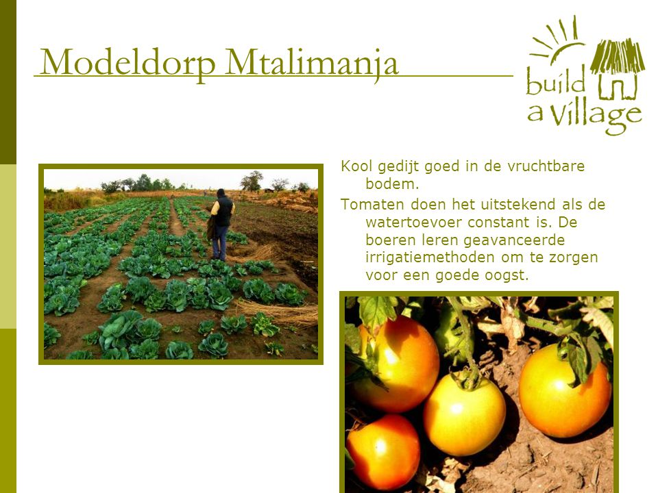 Kool gedijt goed in de vruchtbare bodem. Tomaten doen het uitstekend als de watertoevoer constant is. De boeren leren geavanceerde irrigatiemethoden o