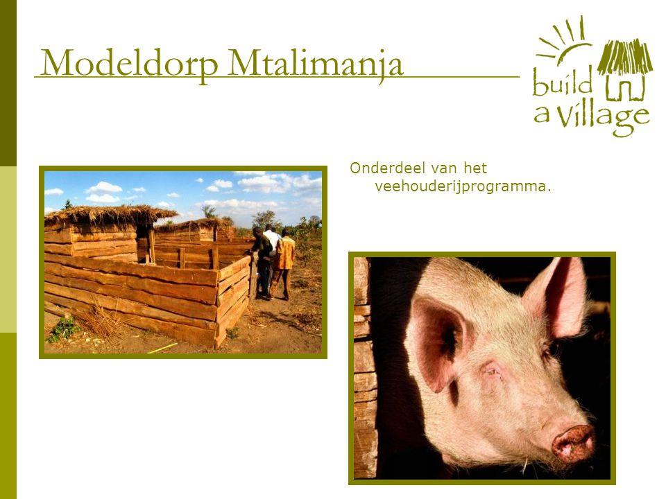 Onderdeel van het veehouderijprogramma. Modeldorp Mtalimanja