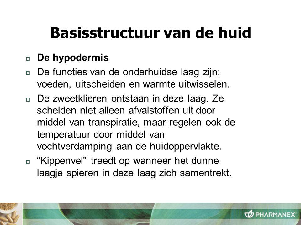  De hypodermis  De functies van de onderhuidse laag zijn: voeden, uitscheiden en warmte uitwisselen.