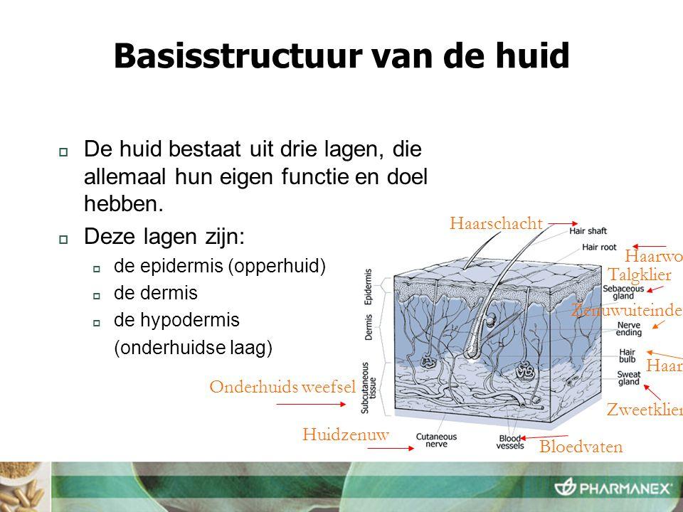 Basisstructuur van de huid  De huid bestaat uit drie lagen, die allemaal hun eigen functie en doel hebben.  Deze lagen zijn:  de epidermis (opperhu