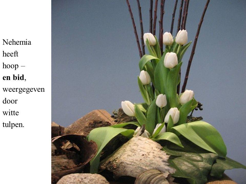 Nehemia heeft hoop – en bid, weergegeven door witte tulpen.