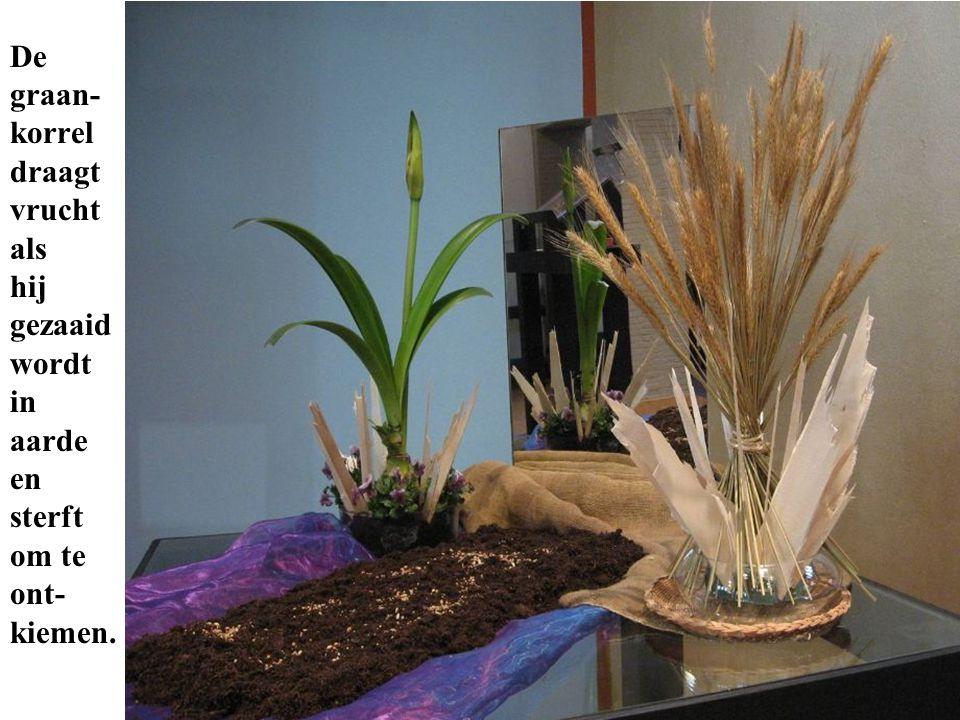 De graan- korrel draagt vrucht als hij gezaaid wordt in aarde en sterft om te ont- kiemen.