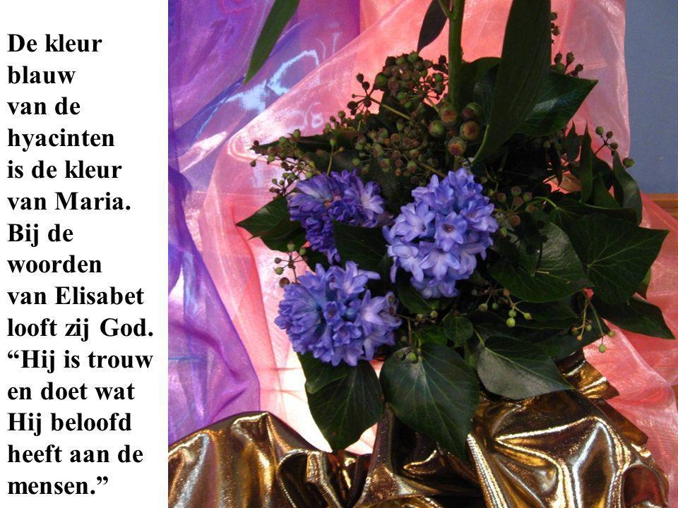 """De kleur blauw van de hyacinten is de kleur van Maria. Bij de woorden van Elisabet looft zij God. """"Hij is trouw en doet wat Hij beloofd heeft aan de m"""