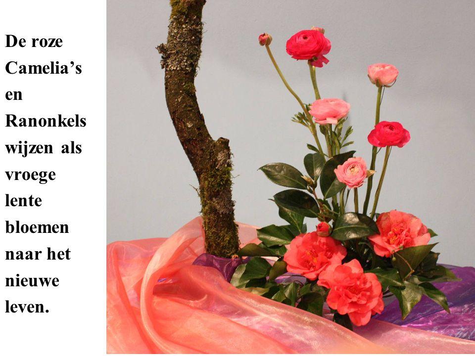 De roze Camelia's en Ranonkels wijzen als vroege lente bloemen naar het nieuwe leven.